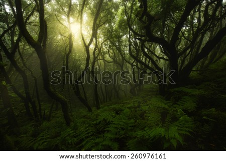 Laurisilva forest in Anaga, Tenerife, Canary islands, Spain - stock photo