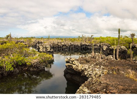 Lava tunnels in Isabela Island, Galapagos. Many trips from Puerto Villamil go there, it's a big tourist attraction to see this volcanic landscape with it's flora and fauna. Endemic Galapagos cactus . - stock photo