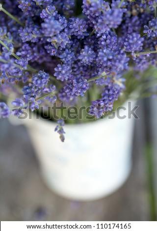 lavender - stock photo