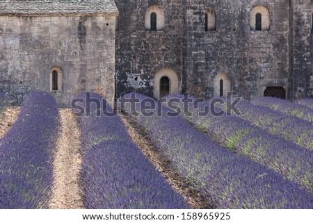 Lavender Abbey in Provence, France - stock photo