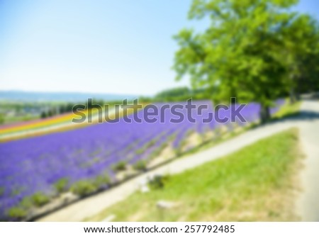 Lavender and colorful flower in the field in Blur style - stock photo