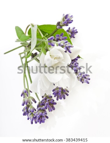 Lavender and jasmine flowers on white background - stock photo
