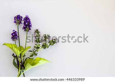 Lavender and thyme in a bouquet on a white background - stock photo