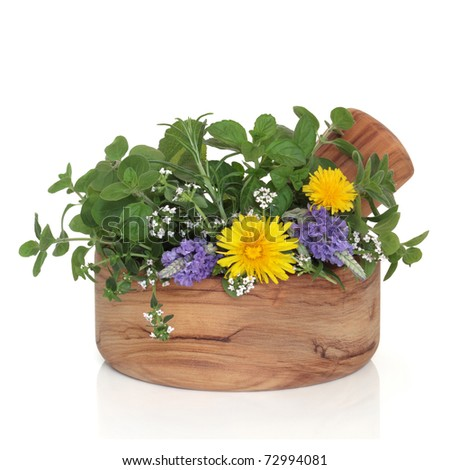 Lavender and thyme in flower with mint, rosemary and oregano herb leaf sprigs with wild dandelion flowers in an olive wood mortar with pestle, isolated over white background. - stock photo