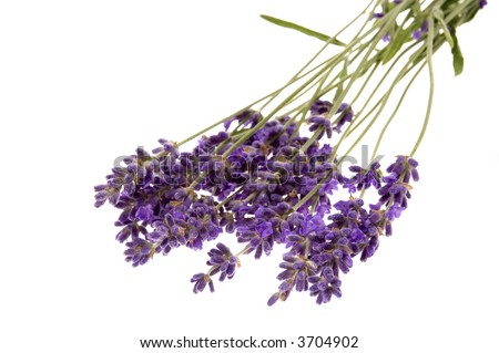 lavender bath items isolated on the white background