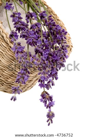 lavender bath items. salt and fresh flowers isolated on the white background