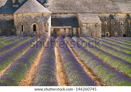 Lavender blooming in front of Abbey of Senanque, Provence, France. - stock photo