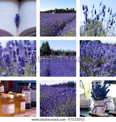 Lavender collage with nine photos - stock photo