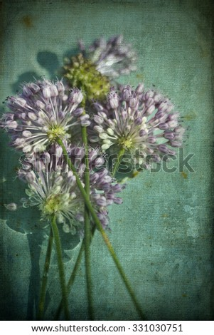 Lavender Crow Garlic Allium Wildflowers / Textured Lavender Crow Garlic Allium Wildflowers / Lavender Crow Garlic Allium Wildflowers /