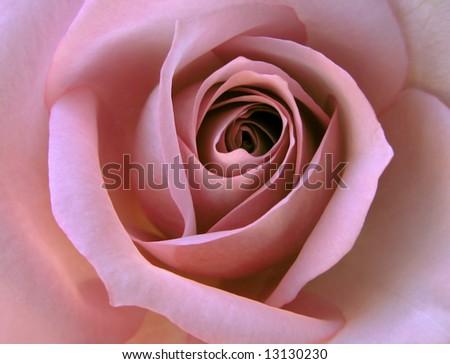 Lavender Dream - stock photo