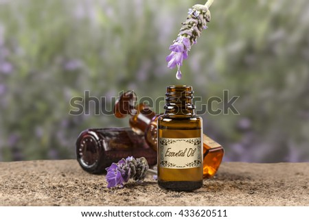 Lavender essential oil drop. Oil from a Lavender flower dropping to a bottle.  - stock photo