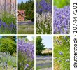 Lavender farm collage with eight photos - stock photo