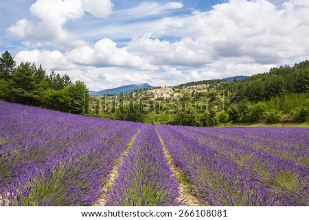 Lavender field and village, France. - stock photo