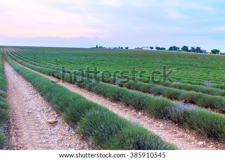 Lavender field harvest near Valensole.Provence.France - stock photo