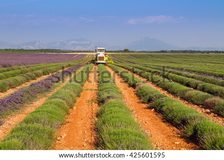 Lavender field harvesting near Valensole in Provence France, Europe
