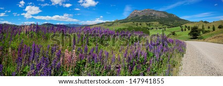 Lavender field next to unpaved road, Coyhaique, Patagonia, Southern Chile, South America - stock photo