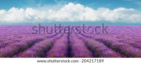 Lavender field on a background of clouds - stock photo