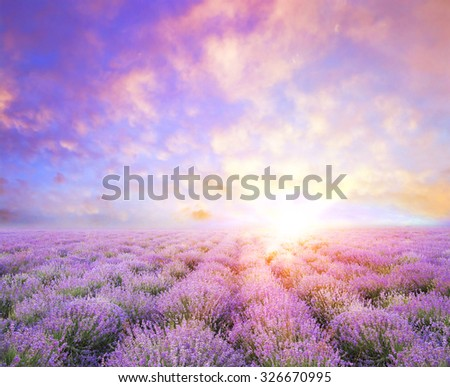 Lavender field over sunser sky. Beautiful image of lavender field over summer sunset landscape. Lavender flower field, image for natural background. - stock photo