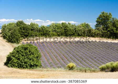 lavender field, Plateau de Valensole, Provence, France - stock photo