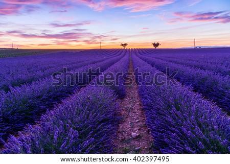 Lavender field summer landscape near Valensole.Provence,France - stock photo