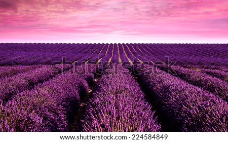 Lavender field Summer sunset landscape - stock photo