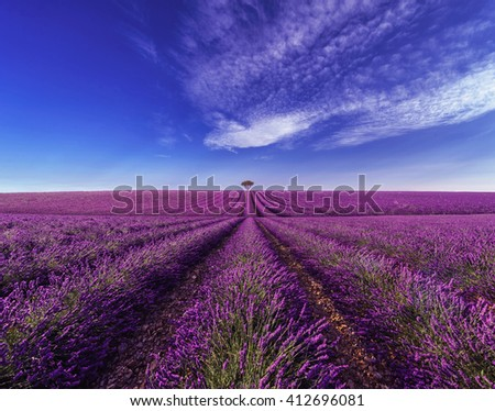 Lavender field Summer sunset landscape with tree - stock photo