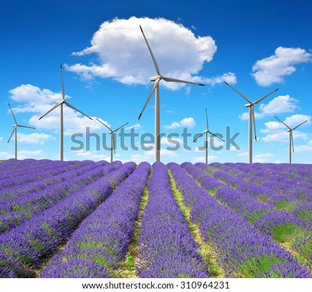Lavender field with wind turbines - stock photo