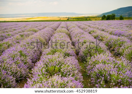 Lavender fields in Bulgaria
