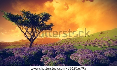 Lavender fields with  solitary tree - stock photo