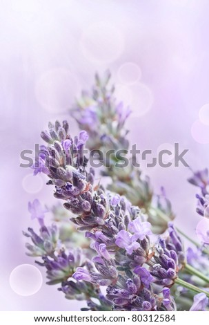 Lavender flower background with beautiful purple colors and bokeh lights - stock photo