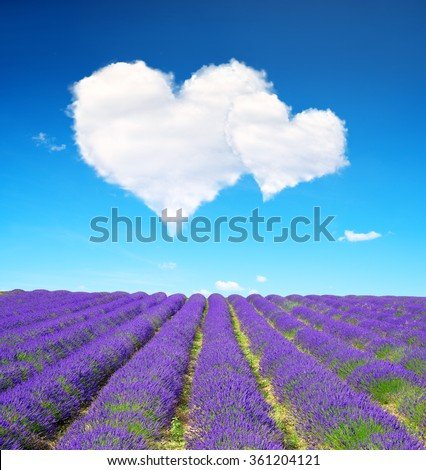 Lavender flower blooming scented fields and blue sky with a white clouds in the form of heart. Valentines day. - stock photo