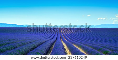Lavender flower blooming scented fields in endless rows. Panoramic view. Valensole plateau, Provence, france, europe. - stock photo