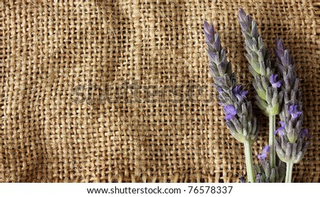 Lavender flower over natural burlap.With copy-space - stock photo