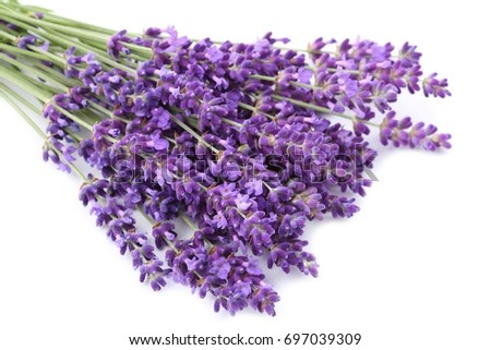 Lavender flowers against white background. Isolated object.