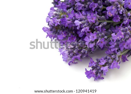 lavender flowers and empty space for your text - stock photo