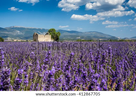 Lavender flowers blooming field. Valensole, Provence, France, Europe.