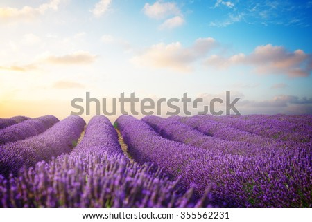 Lavender flowers field with summer blue and pink sunrise sky, Provence, France, retro toned - stock photo
