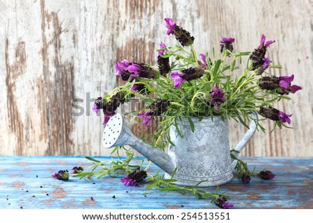 Lavender flowers in watering can against on vintage wood background. - stock photo