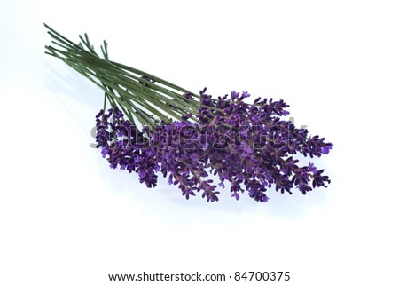 lavender flowers isolated against a white background. purple summer flowers.