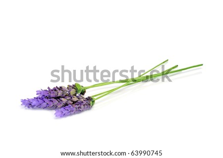 lavender flowers isolated on a white background - stock photo
