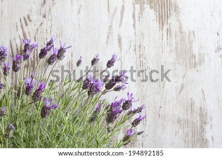 Lavender flowers on vintage wooden boards background - stock photo