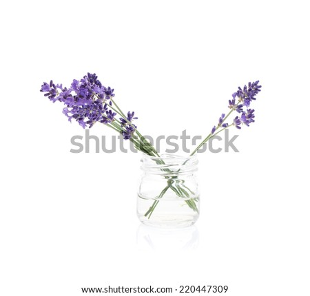 Lavender flowers on white background. - stock photo
