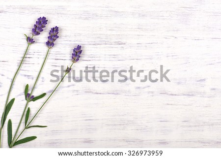 lavender flowers on white wood table background, top view - stock photo