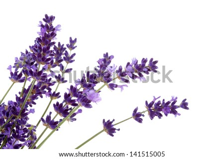 Lavender flowers over white background - stock photo