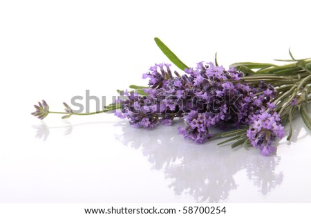 Lavender flowers with beautiful reflection