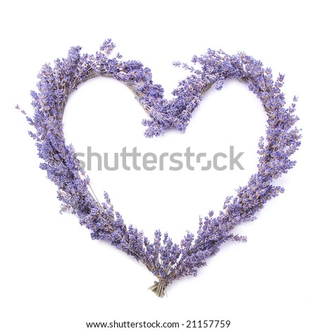 lavender heart - stock photo