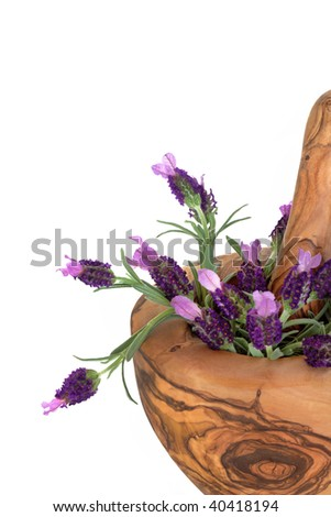 Lavender herb flowers in an olive wood mortar with pestle, over white background.