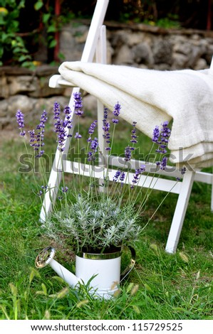 Lavender in a garden - stock photo