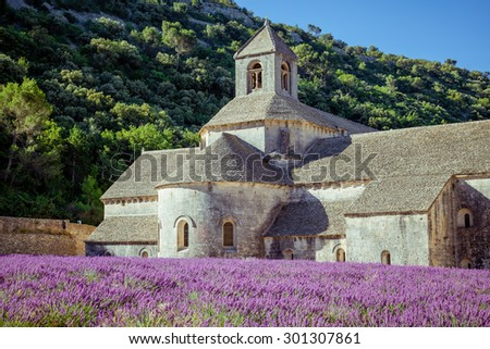 Lavender in front of the old abbey of Senanque in Provence