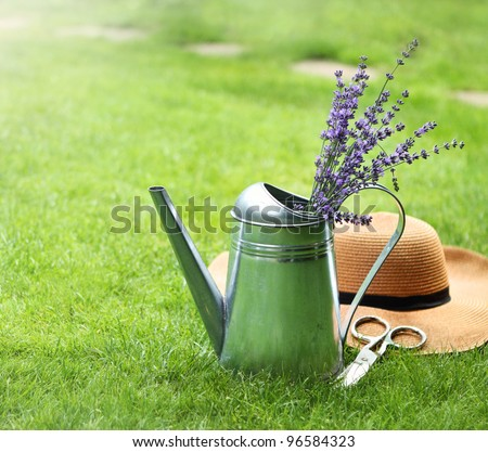 Lavender in watering can, hat and scissors in the summer garden - stock photo